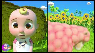 Itsy Bitsy Spider | +More Nursery Rhymes - Cocomelon (ABCkidTV) جميل