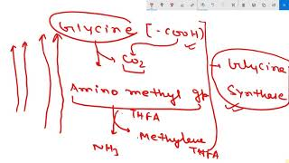 Glycine metabolism - Thủ thuật máy tính - Chia sẽ kinh