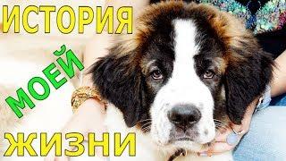 История моей жизни. Говорящая собака / Собака медведяка Московская сторожевая Булат