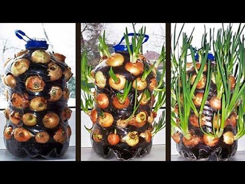 C mo plantar tomates en botellas de pl stico plantas for Que es una mesa de cultivo