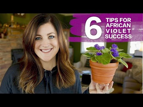 , title : '6 Tips For Caring for African Violets