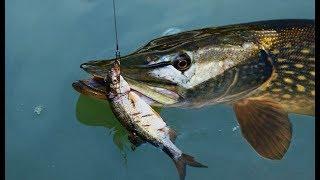 Мал к для рыбалки на живца