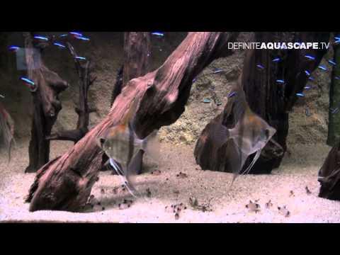 Aquascaping – Aquarium Ideas from ZooBotanica 2012, part 5