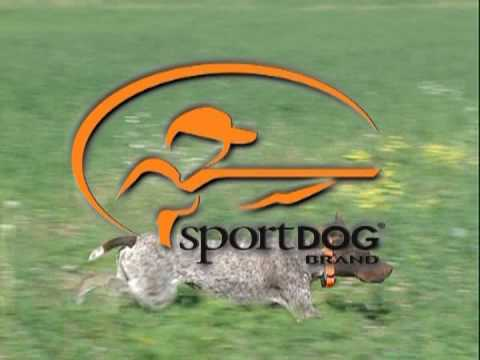 Keep your dog on-track