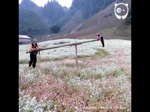 Необычные вьетнамские качели