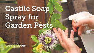 Castile Soap Spray For Garden Pests