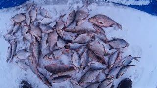 Зимняя рыбалка на яузе водохранилище