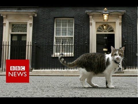 Downing Street cat gets a helping hand - BBC News