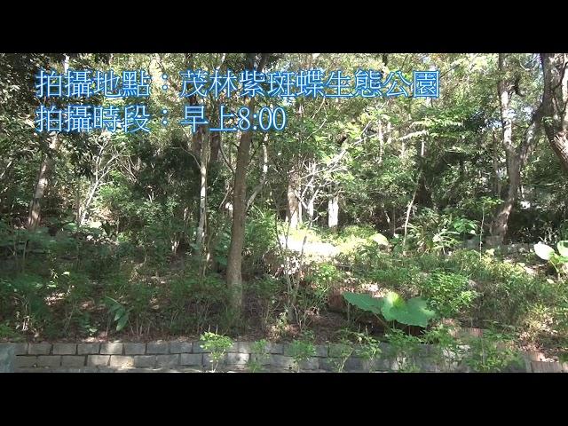 <html> <body> Film for Purple Butterfly2020-1-5 </body> </html>