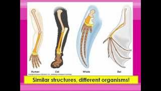 Homologous And Vestigial Structures