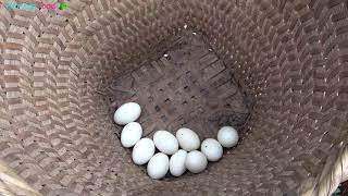 Primitive life - Forest people meet ethnic girl boiled eggs - Eating delicious