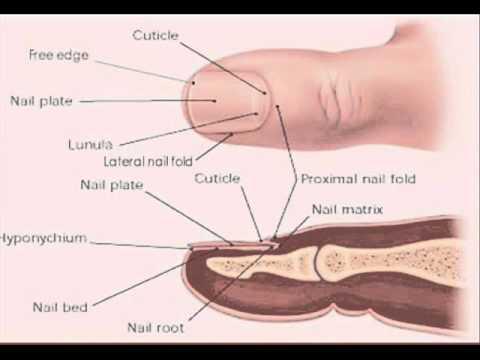 Foliation nail treatment