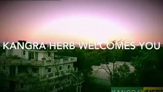 Rare herbs in Himachal Pradesh
