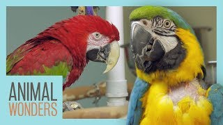 Macaw Jungle Gym | New Perches!