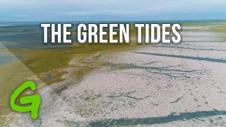 """The reality behind industrial meat: """"the green tides"""""""