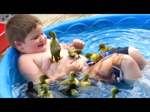 Ducks Are Awesome!