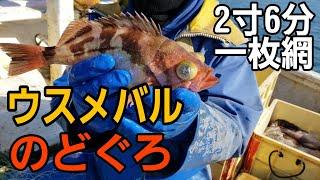本当にうるさい漁師!ウスメバル,のどぐろ漁!ウオノエ,タイノエ