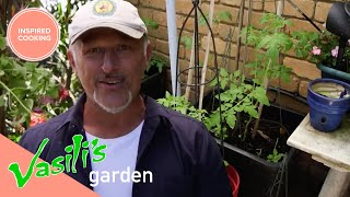 How To Take Care Of Your Garden And Keep The Possums Out! | Full Episode | Vasili's Garden