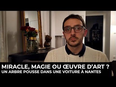Miracle, magie, ou œuvre d'art ? Un arbre pousse dans une voiture à Nantes