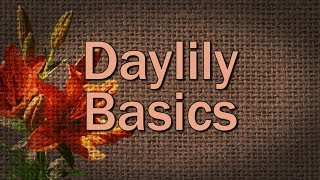 Daylily Basics – Family Plot