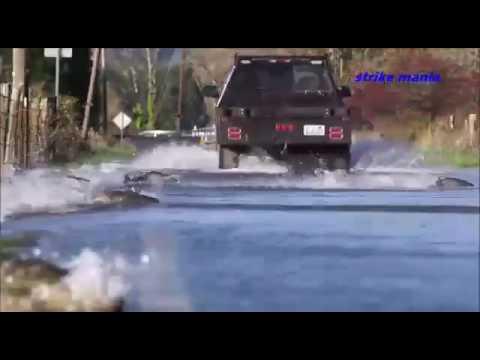 lososi přecházejí silnici