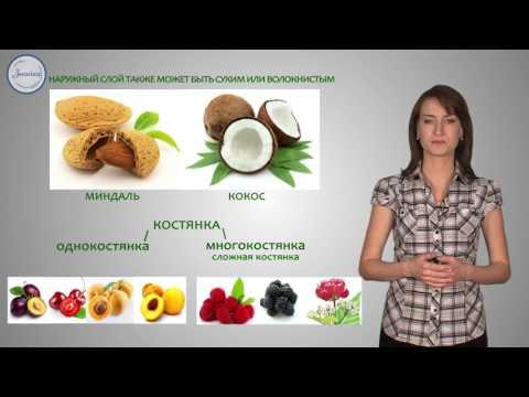 Плод - орган защиты и расселения семян