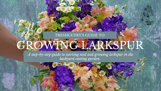 How To Grow Larkspur From Seed - Cut Flower Gardening For Beginners Series