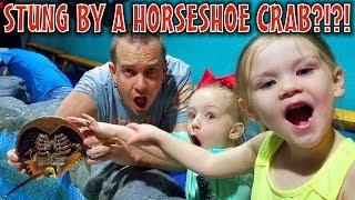 STUNG BY A HORSESHOE CRAB?!?! Aquarium Scavenger Hunt!!