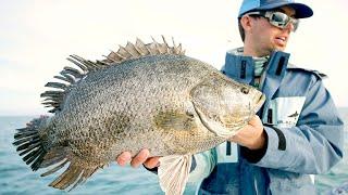 Catching Spawning Tripletail, Redfish and Black Drum