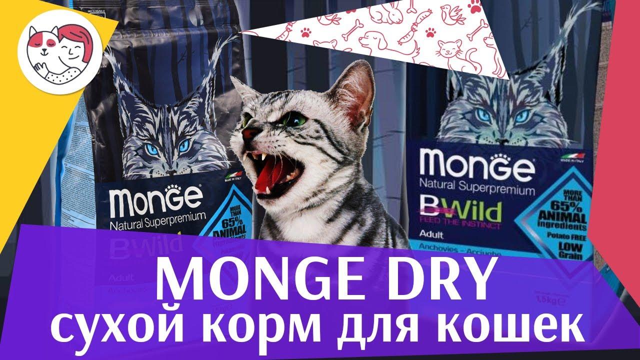 MongeDry на ilikepet