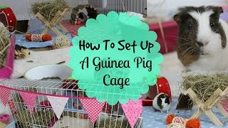 How To: SET UP A GUINEA PIG CAGE | Hamster HorsesandCats