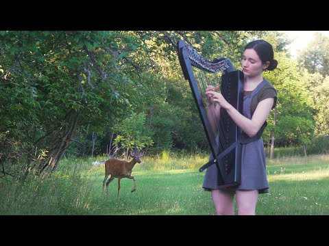 Harp Session in the Forest Turns Into a Disney Moment