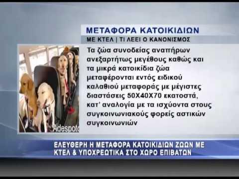 Με τους επιβάτες στα ΚΤΕΛ και τα κατοικίδια - ENA Channel
