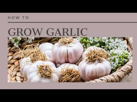 , title : 'How to Grow Garlic-The Complete Guide to Garlic