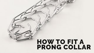 How to Fit a Prong Collar
