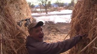 Big Mule Deer Shot In The Alfalfa Field - Fred Eichler