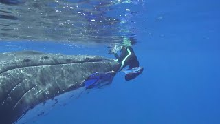 Une biologiste américaine protégée par une baleine <3