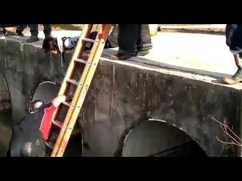 Video. El emotivo momento en que bomberos de Berisso rescataron a una perrita y se la devolvieron a su dueña