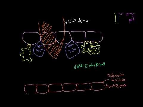 الصف العاشر الأحياء علم الأحياء البشري الاستجابة الالتهابية