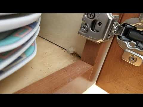 Ants All Over This Kitchen in Hightstown, NJ