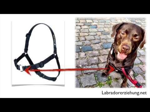 SENSE-ation Harness Hundegeschirr
