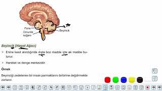 Eğitim Vadisi AYT Biyoloji 1.Föy İnsan Fizyolojisi 2 (Sinir Sistemi) Konu Anlatım Videoları