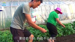 【原创】(479)东北人最爱吃啥菜?农村一家人菜园忙播种 一冬饭桌上离不开它!