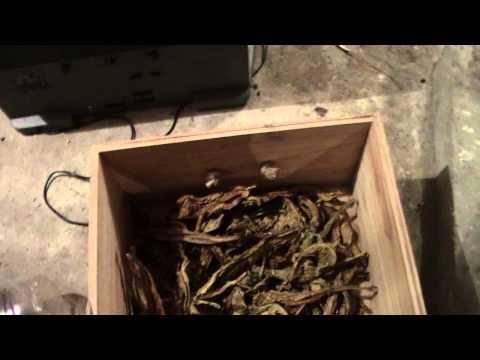 Nikotinka para el adelgazamiento los pinchazos
