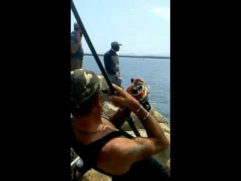 Lolio per pescare dove comprare
