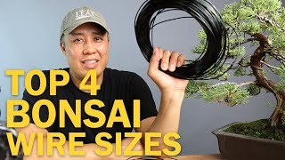 Top Four Bonsai Wire Sizes for Wiring a Bonsai Tree