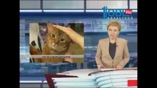 """Выставка кошек """"Мяу Шоу""""- декабрь 2014,Челябинск"""