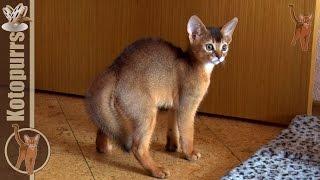 """Смешной маленький котенок видит """"ИНЫХ"""" [kotopurrs]"""
