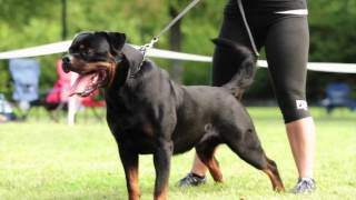 NRK BREED SHOW 2014 HD