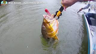 Os Pinimas do Rio Acari na Chuva - Fishingtur na TV 481
